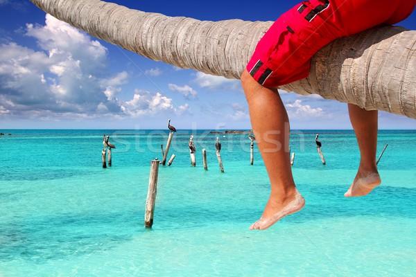 Caribbean inclined palm tree beach tourist legs Stock photo © lunamarina