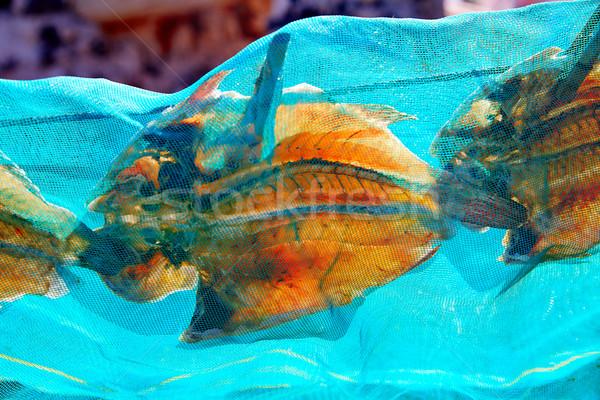 Majanicho dried Parrot fish Vieja in Fuerteventura Stock photo © lunamarina