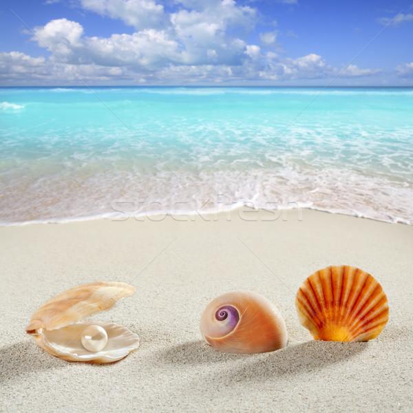 Plage vacances d'été shell perle clam escargot Photo stock © lunamarina