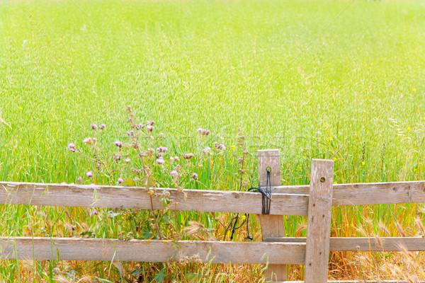 Balearic green meadow in formentera and wood fence Stock photo © lunamarina