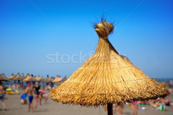 Costa praia sul tenerife canárias árvore Foto stock © lunamarina