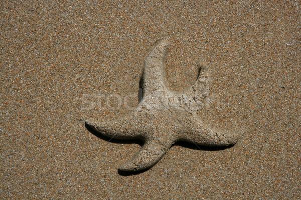 Sand made starfish on the sea shore coastline Stock photo © lunamarina