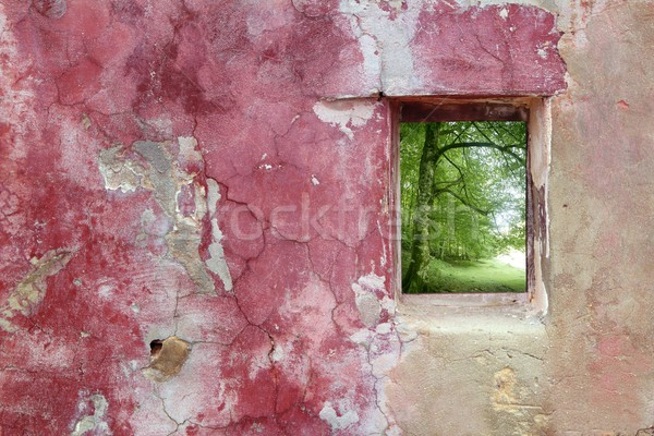 aged weathered pink wall window beech forest Stock photo © lunamarina