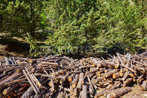 Brandhout brand patroon textuur Spanje bos Stockfoto © lunamarina