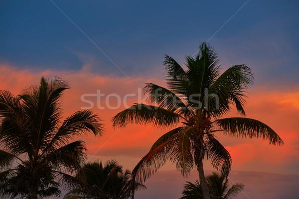 Stock fotó: Naplemente · égbolt · kókuszpálma · fák · Karib · narancs