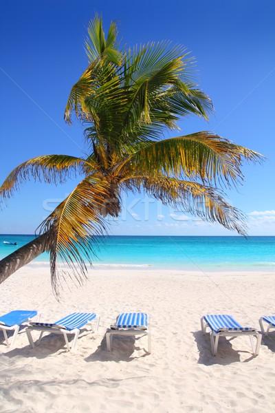 Foto stock: Caribe · cocotero · árboles · mar · hermosa · agua