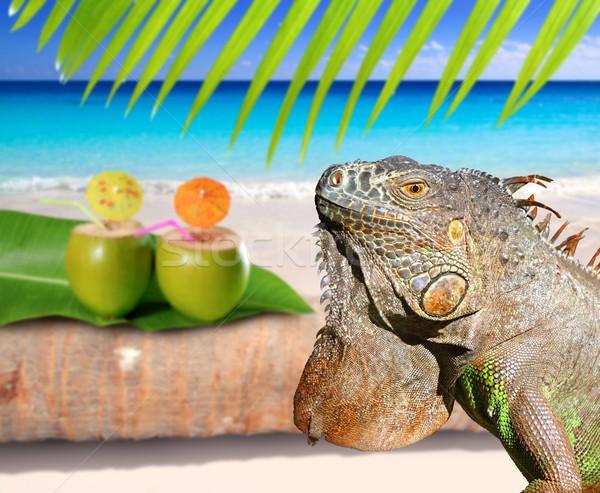 Meksyk iguana Kokosowe Karaibów plaży tropikalnych Zdjęcia stock © lunamarina