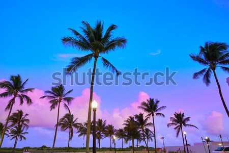 California high palm trees silohuette on blue sky Stock photo © lunamarina