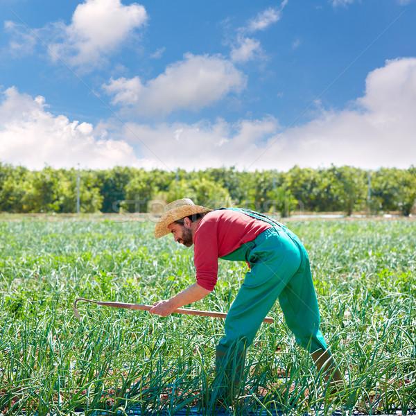 Landbouwer man werken ui boomgaard schoffel Stockfoto © lunamarina
