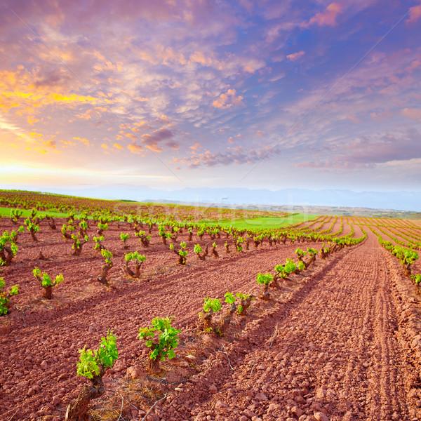 LA szőlőskert mezők út szent naplemente Stock fotó © lunamarina