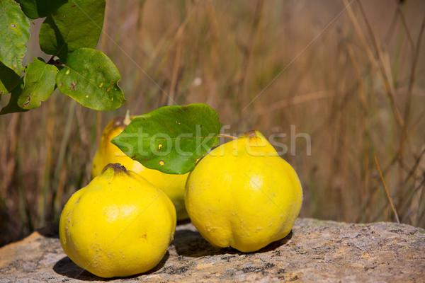 Сток-фото: айва · фрукты · изображение · каменные · природы · Открытый