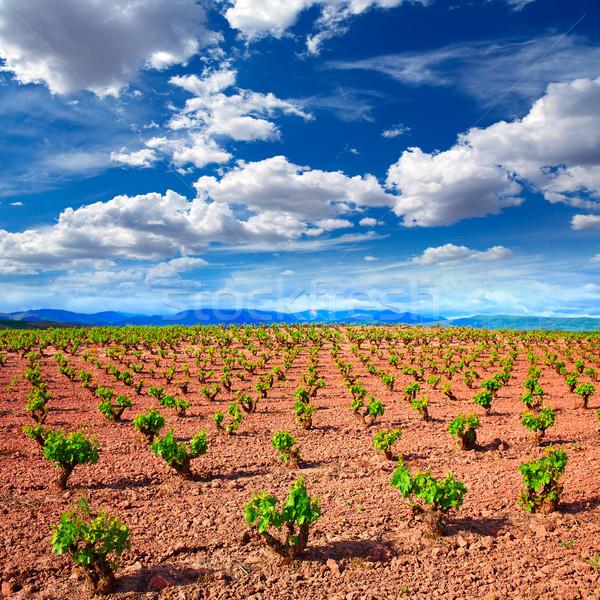 LA szőlőskert mezők út szent tájkép Stock fotó © lunamarina