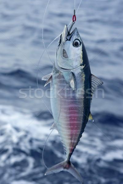 Kék uszony tonhal zsákmány közzététel mediterrán Stock fotó © lunamarina