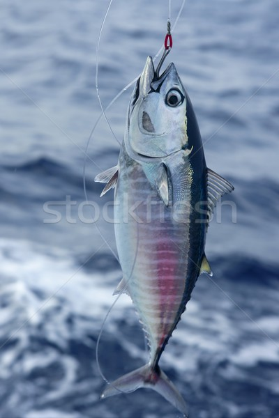 синий плавник тунца Средиземное море Сток-фото © lunamarina