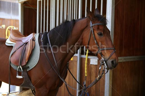 Kahverengi at eyer kararlı kapı yüz Stok fotoğraf © lunamarina