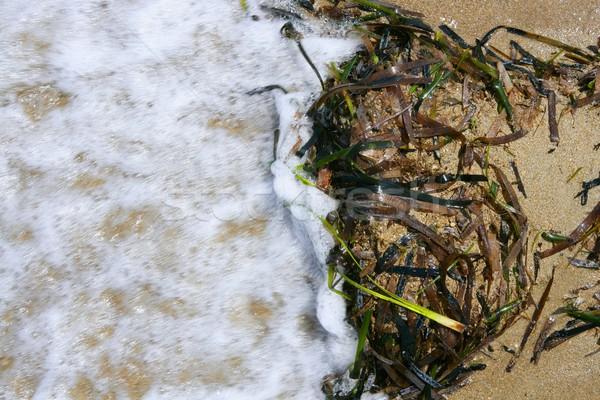Morze Śródziemne zielone wodorost wody plaży Zdjęcia stock © lunamarina