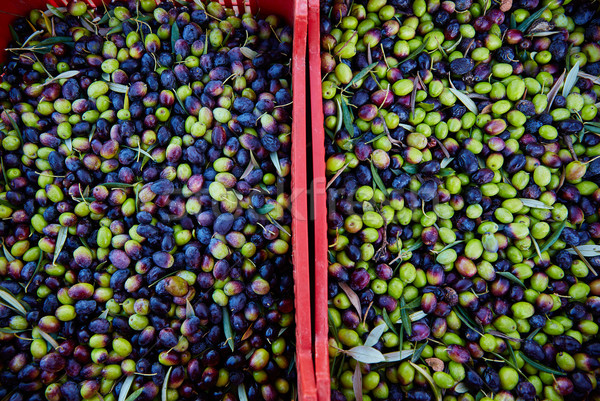 Olives texture in harvest at Mediterranean Stock photo © lunamarina