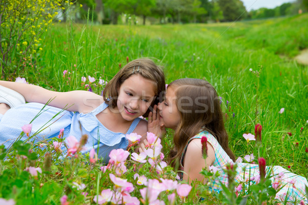 twin sisters whispering ear on spring flowers meadow Stock photo © lunamarina