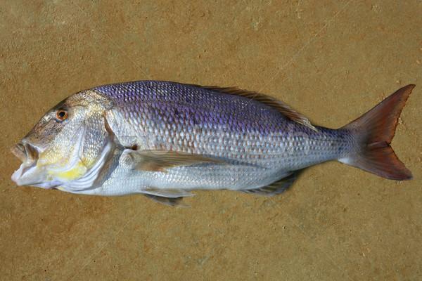 Средиземное море аналогичный хорошие рыбы глаза Сток-фото © lunamarina
