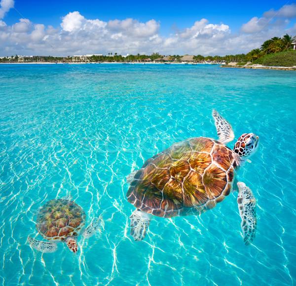 Akumal beach turtles photomount Riviera Maya Stock photo © lunamarina