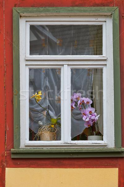Stock fotó: Orchidea · virágok · ablak · Németország · hegyek · város