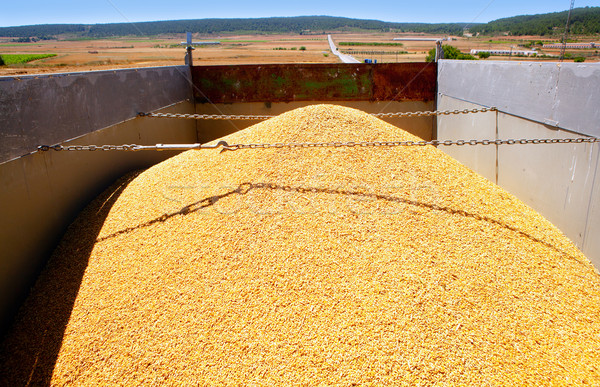 cereal harvest wheat mound in truck Stock photo © lunamarina