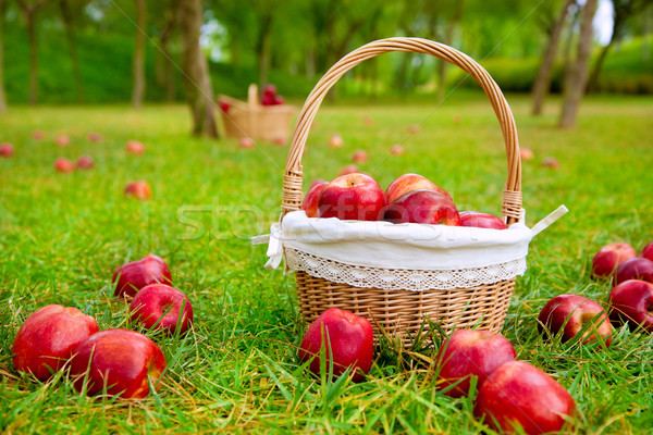 Appels mand gras bomen veld Rood Stockfoto © lunamarina