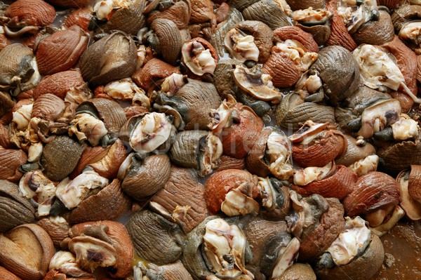 Background texture of Atlantic sea snail meat Stock photo © lunamarina
