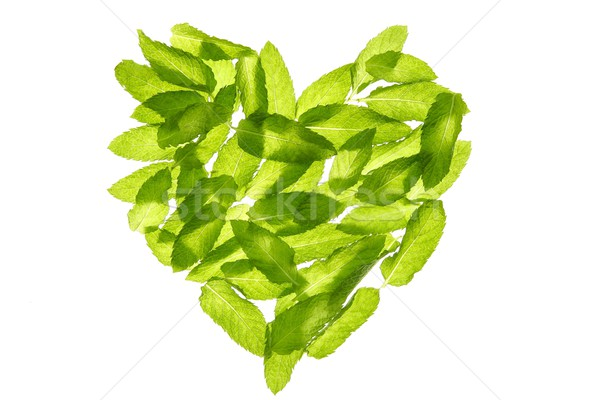 Basil minth leaves hearth shape isolated on white Stock photo © lunamarina