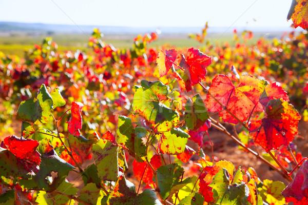 ősz arany piros tájkép nyár mező Stock fotó © lunamarina