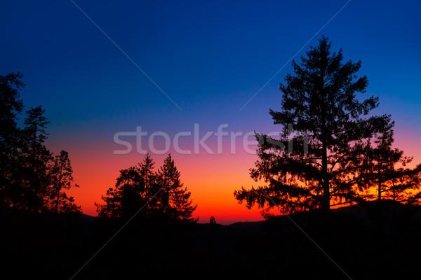 Pôr do sol árvore silhuetas Califórnia EUA Foto stock © lunamarina