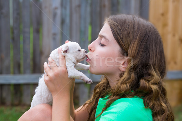 Girl playing kissing puppy chihuahua pet dog Stock photo © lunamarina