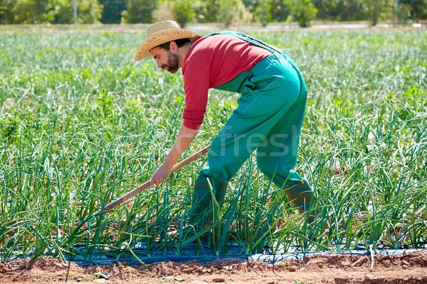 Agricultor hombre de trabajo cebolla azada Foto stock © lunamarina