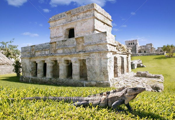 iguana on grass in Tulum mayan ruins Stock photo © lunamarina