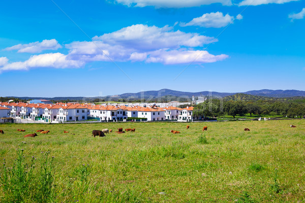 Real del Jara by Via de la Plata way in Spain Stock photo © lunamarina