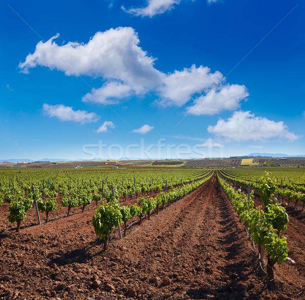 Ribera Guadiana vineyard Extremadura Spain Stock photo © lunamarina