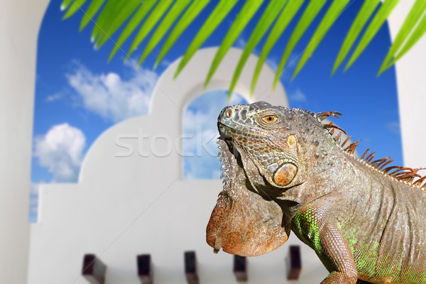 Mexican iguana white archs house blue sky in Mexico Stock photo © lunamarina
