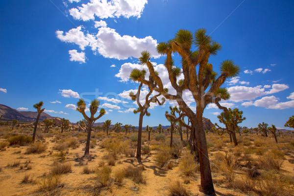 árvore parque vale deserto Califórnia EUA Foto stock © lunamarina