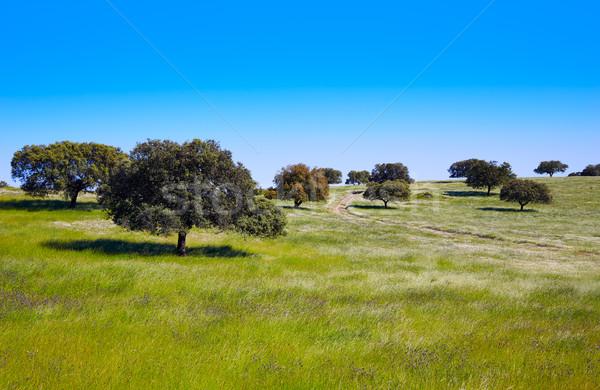 Dehesa grassland by via de la Plata Spain Stock photo © lunamarina