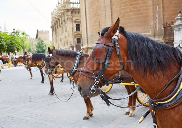 Seville horse carriages in Cathedral of Sevilla Stock photo © lunamarina