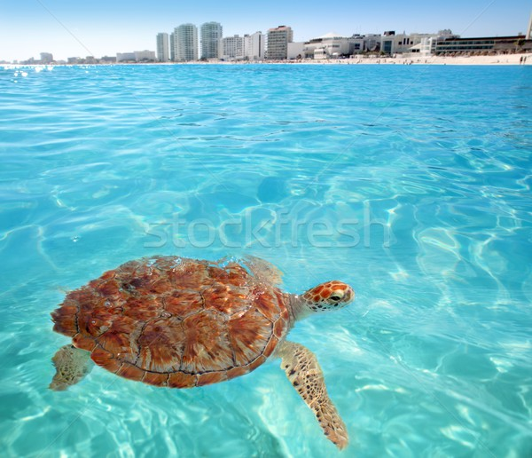 Vert mer tortue Caraïbes surface cancun Photo stock © lunamarina