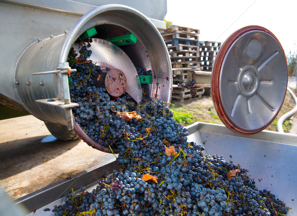 Foto stock: Vinificação · uvas · fruto · indústria · fazenda