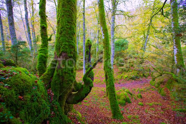 ősz dzsungel Spanyolország ősz textúra fa Stock fotó © lunamarina