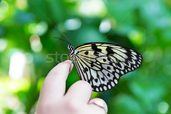 hand finger Rice Paper butterfly Idea leuconoe Stock photo © lunamarina