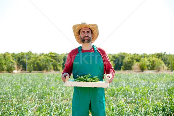 Agriculteur homme récolte oignons verger domaine Photo stock © lunamarina