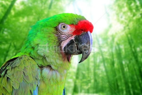 Ara Militaris Military Macaw Green parrot Stock photo © lunamarina
