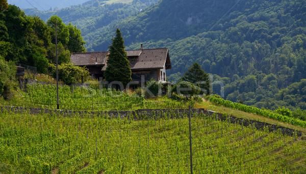 Альпы Швейцария виноградник дерево весны лес Сток-фото © lunamarina
