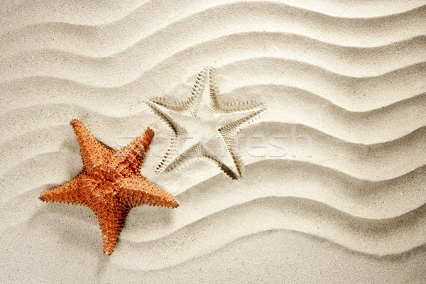 beach white wavy sand starfish summer vacation Stock photo © lunamarina