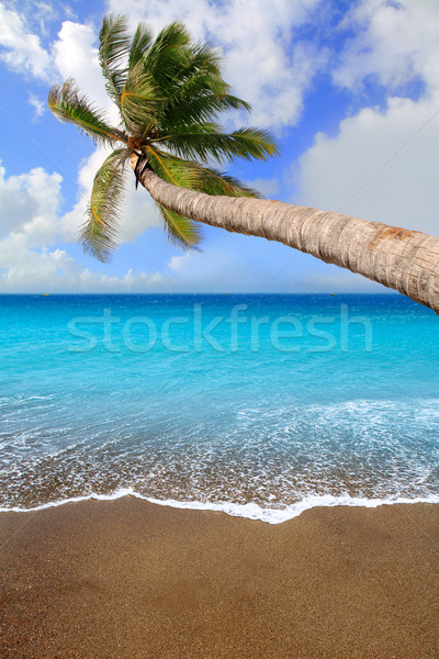 Canary Islands brown sand beach tropical aqua Stock photo © lunamarina