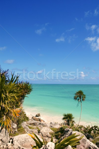 tulum mayan riviera tropical beach palm trees Stock photo © lunamarina